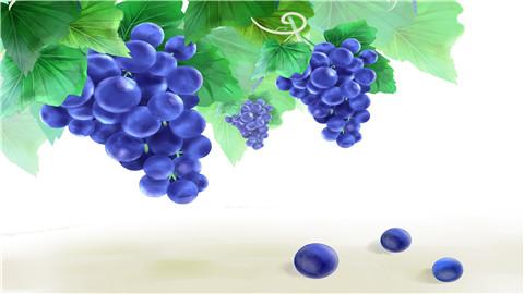 葡萄的热量