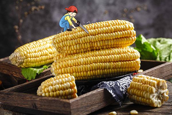 吃玉米的好处 玉米的功效与作用