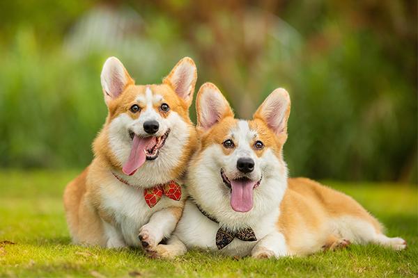 狗咬了多久过安全期 怎样确定用不用打狂犬疫苗