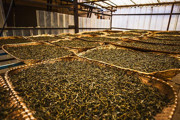 普洱茶的功效与作用 普洱茶对人体的好处