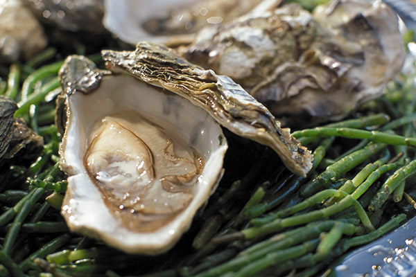 生牡蛎1.jpg