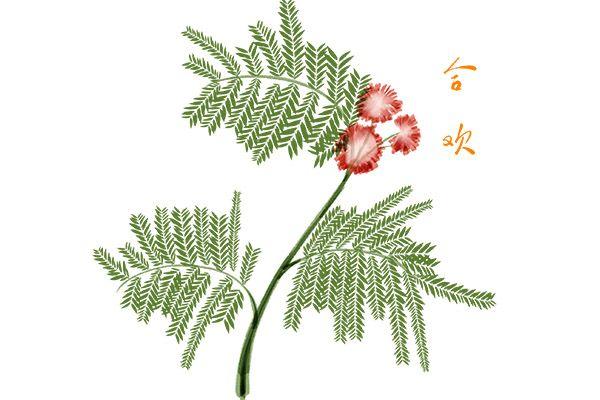 合欢花1.jpg