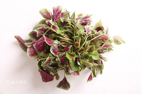 红苋菜1.jpg