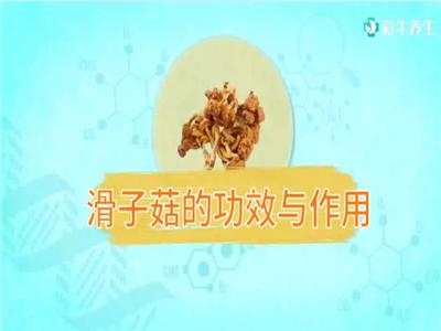 滑子菇的功效与作用