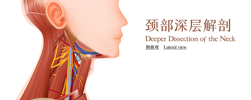 颈动脉狭窄是什么情况