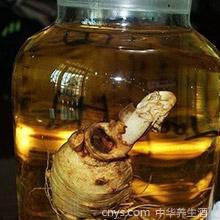 丹参灵芝酒